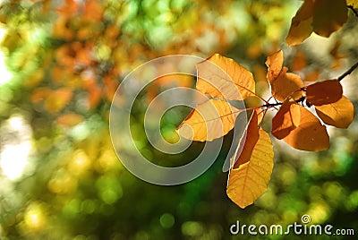 Autumn foliage of trees 2