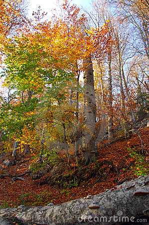 Free Autumn Forest Stock Images - 11993484