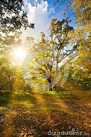 Free Autumn Forest Stock Photos - 27073913