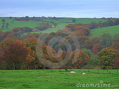 Autumn in the forest of Bowland