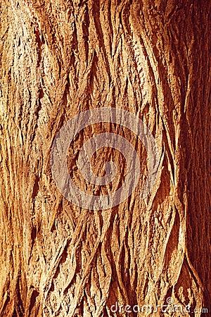 Autumn forest brown wooden background. Texture forest wooden tre
