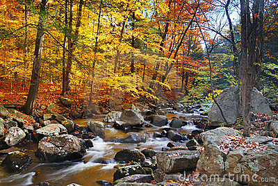 Autumn forest creek