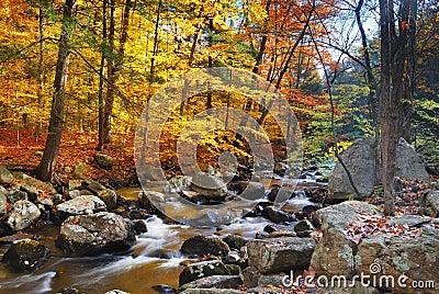 Autumn forest creek