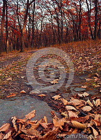 Autumn forest with dry leaves and the path