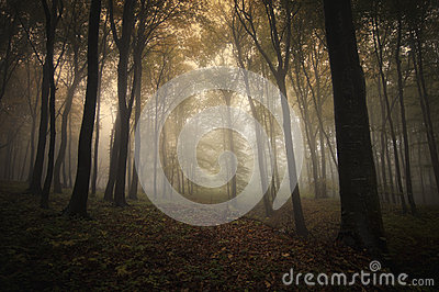 Autumn in forest with fog and light