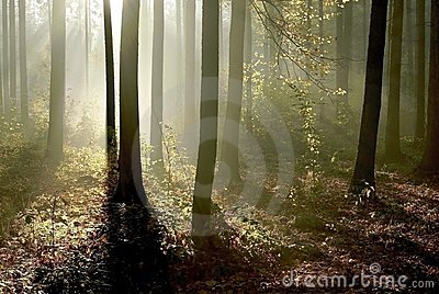 Autumn forest with morning sunbeams