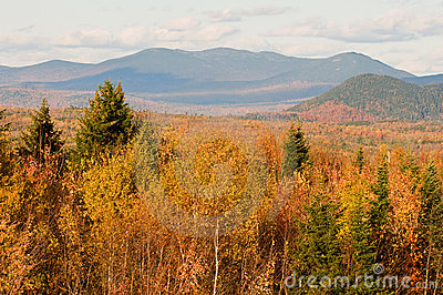 Autumn forest and mountains