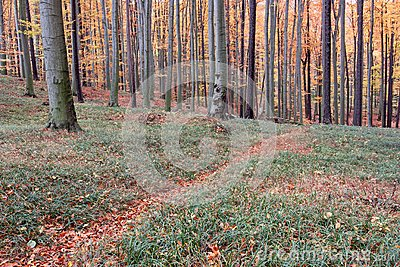 Autumn forest path covered with leaves
