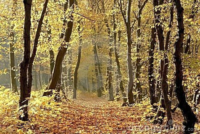 Autumn forest path with early morning sun rays