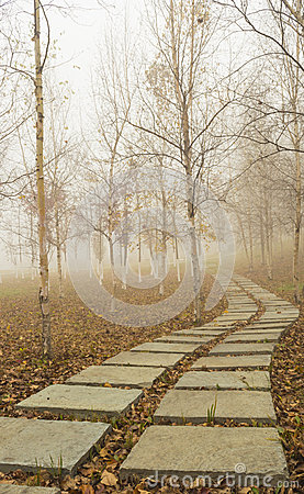 The autumn forest path
