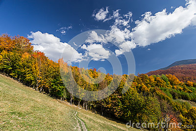 Autumn forest and path in the meadow