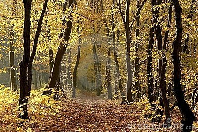 autumn forest path at sunrise