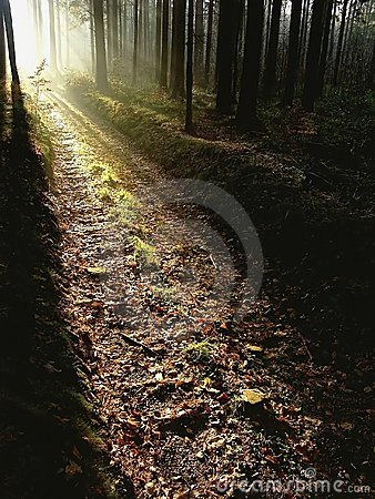 Autumn forest path at sunset