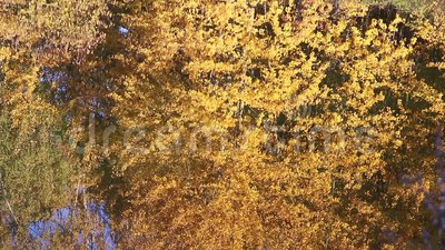 Autumn forest pond with reflections stock footage