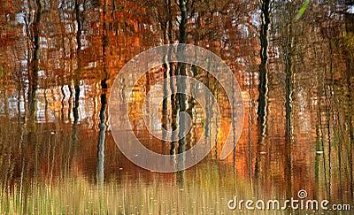 Autumn forest reflexion