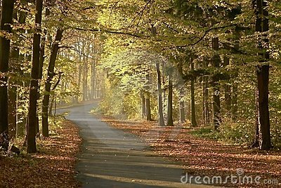 Autumn forest road with early morning sun rays