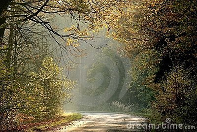 Autumn forest road in the rays of light
