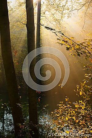 Autumn forest sun rays