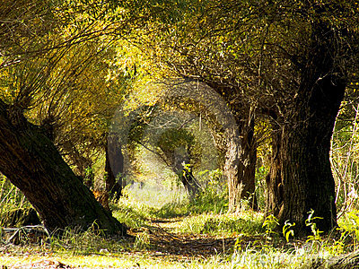 Autumn forest tunnel