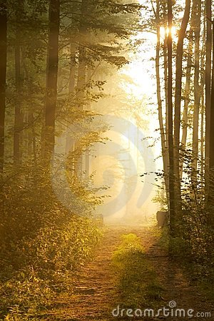 Free Autumn Forest With Rays Of Early Sun Royalty Free Stock Images - 10943639