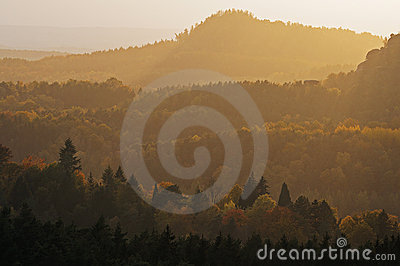 Autumn forests covered by light haze