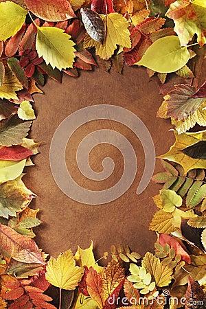 Free Autumn Frame Royalty Free Stock Photography - 11029417