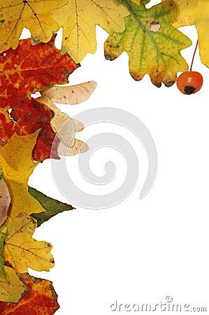 Free Autumn Frame Stock Photography - 3575192