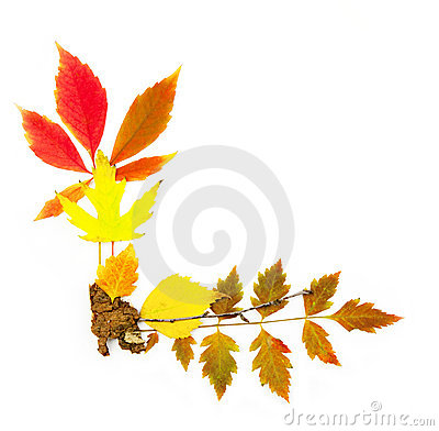 Autumn frame corner / beautiful real leaves