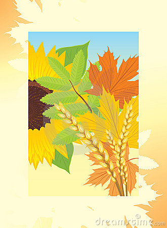 Autumn frame with leaves, sunflower and wheat ears