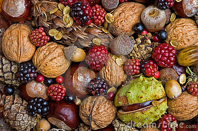https://thumbs.dreamstime.com/x/autumn-fruits-6500050.jpg