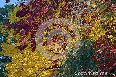 Autumn in full bloom