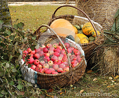 Autumn garden goodies