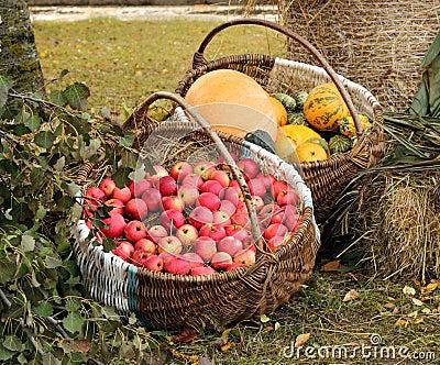 Autumn garden goodies