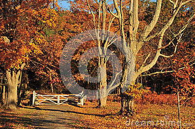 Autumn Gate Landscape