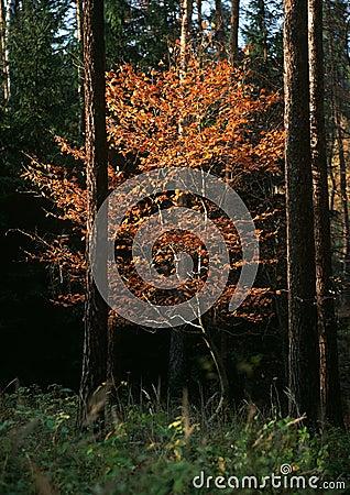Autumn gold creations
