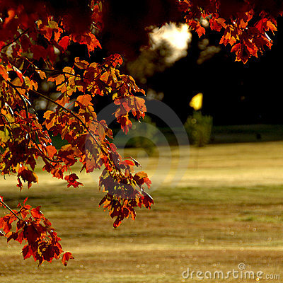 Autumn on Golf Course