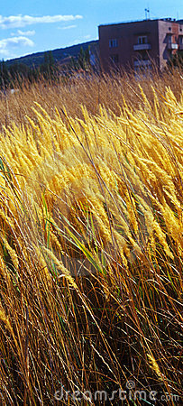 Autumn grass on city suburb.