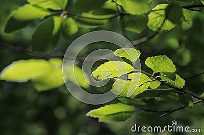 Autumn Greens