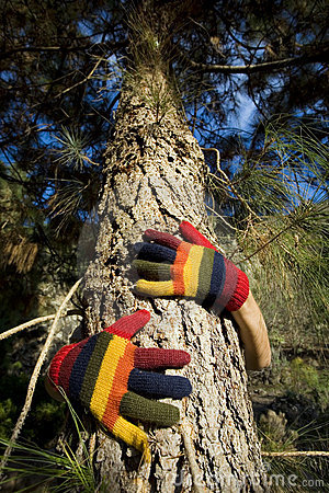 Autumn Hands on a Tree Trunk