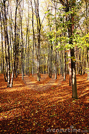 Autumn in hardwood forest