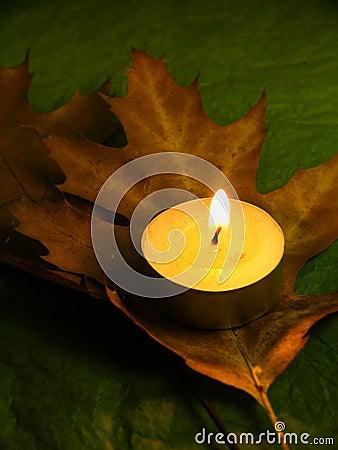 Autumn and harmony