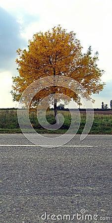 Autumn on the highway