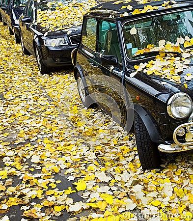 Free Autumn In Paris Stock Photography - 3632792