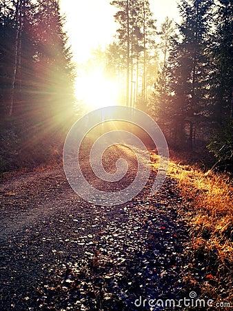 Free Autumn In Swedish Woodlands Stock Photos - 27849313