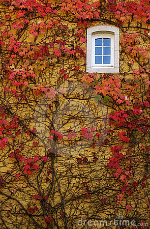 Free Autumn Ivy Wall With Window Stock Images - 4243704