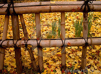 Autumn Japanese fence