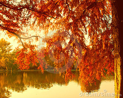 Autumn lake in warm colors