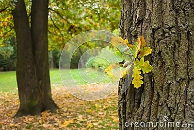 Autumn landscape with acorns
