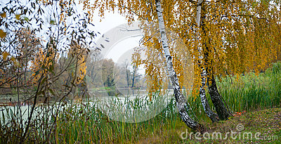 Autumn landscape of birch and a pond