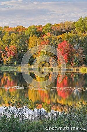 Free Autumn Landscape Doe Lake Royalty Free Stock Photo - 11242565
